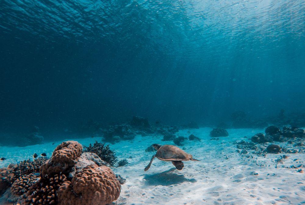 Sea-Thru-Underwater-Photography-Algorithm-SLR-Lounge_0001-1000x675